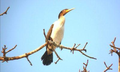 PLUME TOURISTIQUE DE ZÉINA » parc des oiseaux de Djoudj «